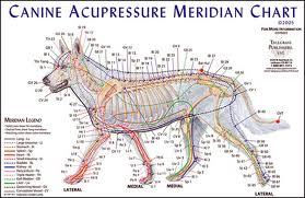 Agopuntura canina