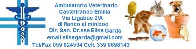 Veterinario Castelfranco Emilia