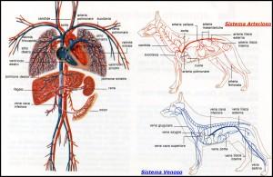 il-cuore-del-cane184