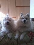 Lilly e il suo amichetto