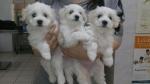 i cuccioli di Sissi e Kim