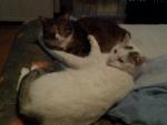 I gatti di Elena